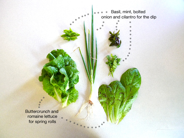 lettuce, basil, mint, onion, and cilantro for spring rolls and dip