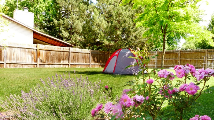 a small dome tent lit by a beautiful sunny day among the flowers and trees of our backyard