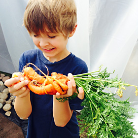 Kiki holding a large carrot tangle regrown from a carrot top